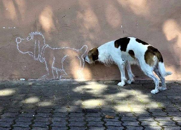 20 imágenes de perros tomadas en el momento perfecto1