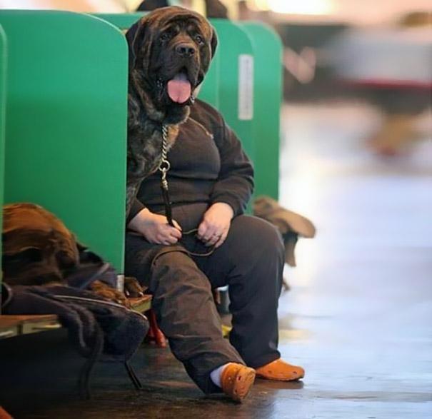 20 imágenes de perros tomadas en el momento perfecto10