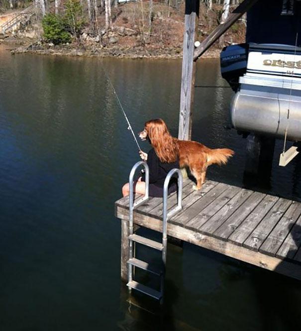 20 imágenes de perros tomadas en el momento perfecto3