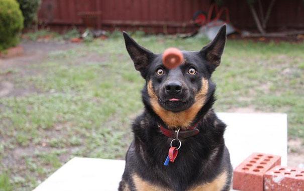 20 imágenes de perros tomadas en el momento perfecto6