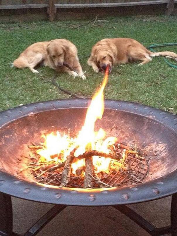 20 imágenes de perros tomadas en el momento perfecto7