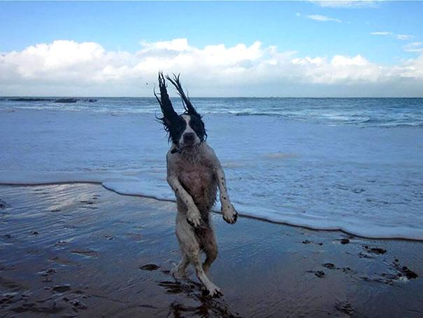 20 imágenes de perros tomadas en el momento perfecto9