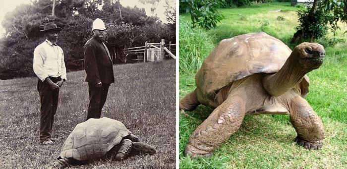Jonathan la tortuga más vieja del mundo 1