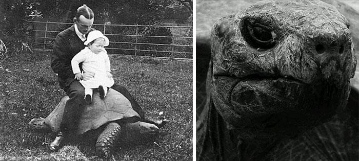 Jonathan la tortuga más vieja del mundo 3