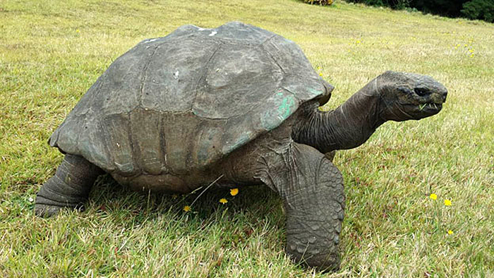 Jonathan la tortuga más vieja del mundo 4