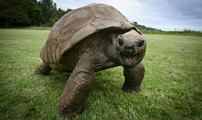 Jonathan la tortuga más vieja del mundo 6