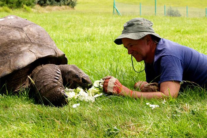 Jonathan la tortuga más vieja del mundo 8